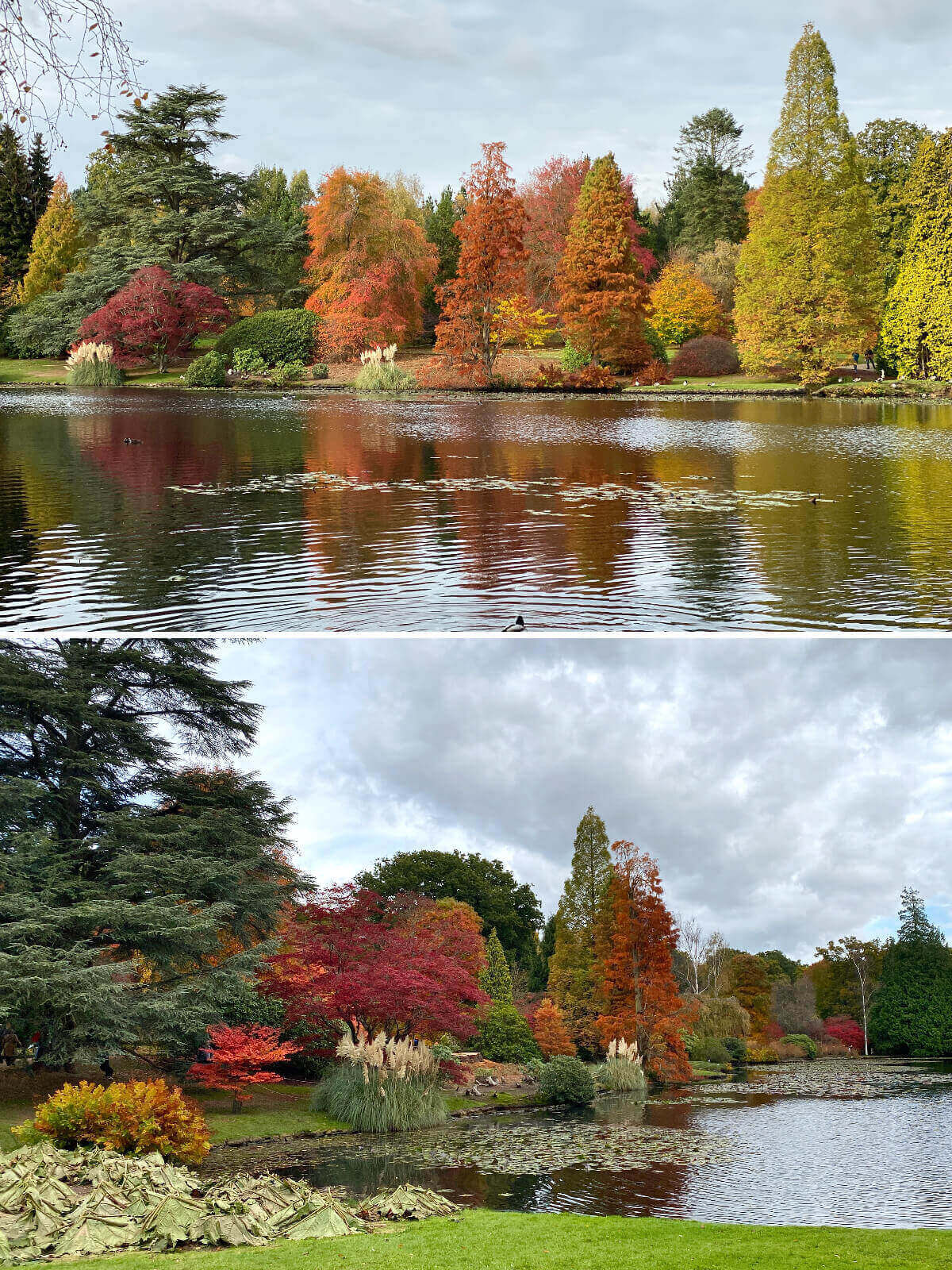 Autumn Sheffield Park and Garden, England