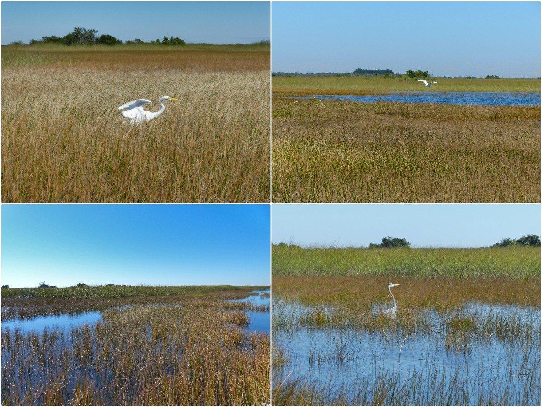 Everglades National Park, Florida, Estados Unidos