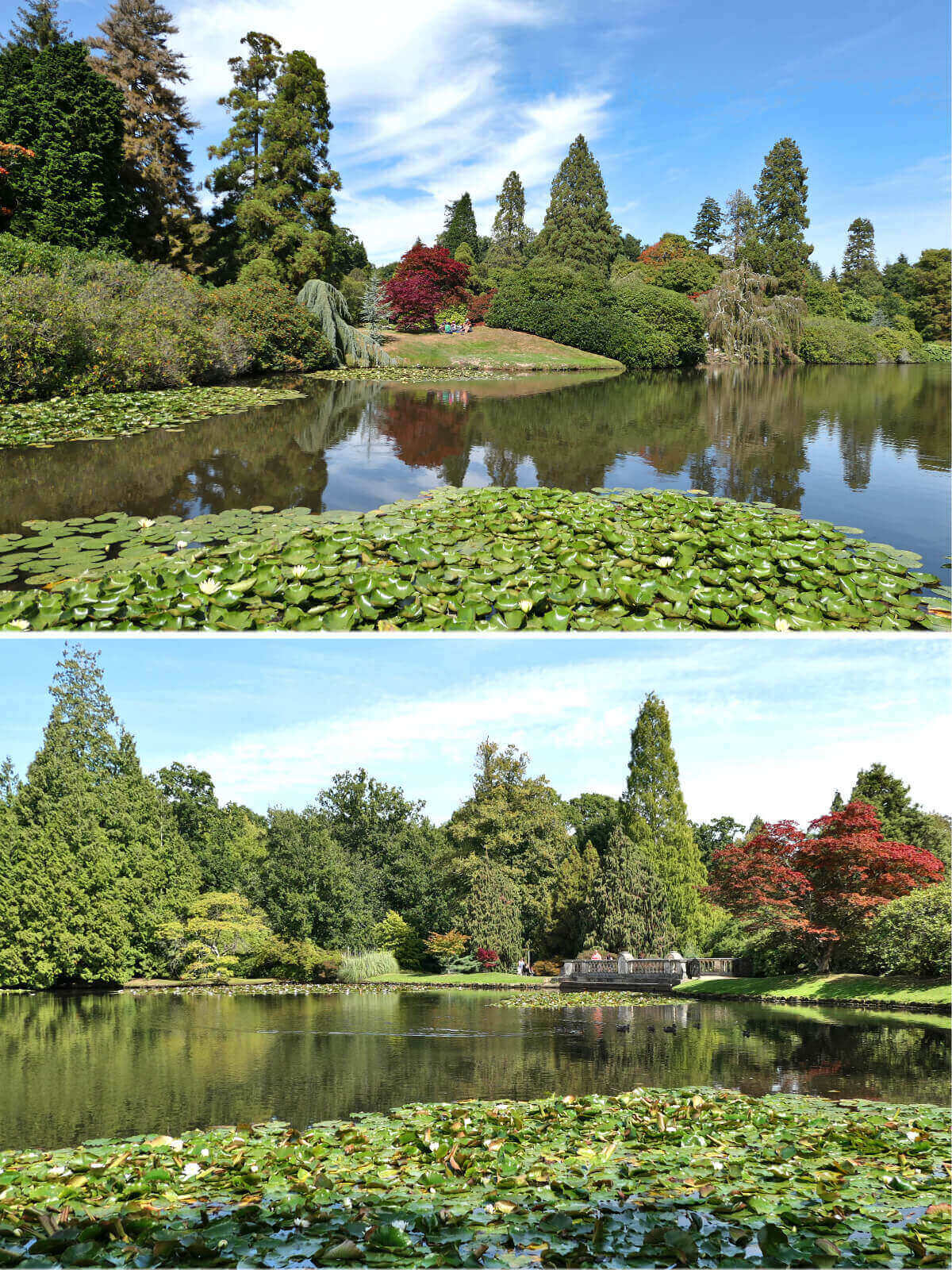 Summer Sheffield Park and Garden, England